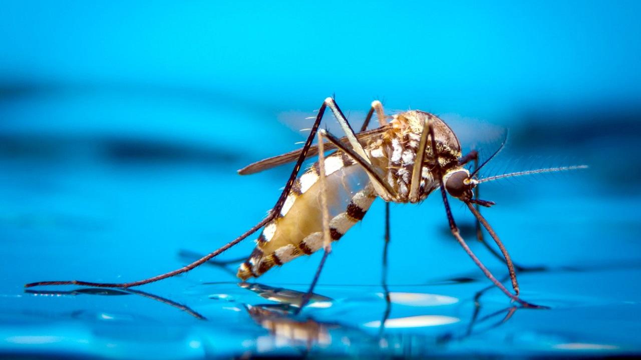 نیش حشرات در سفر