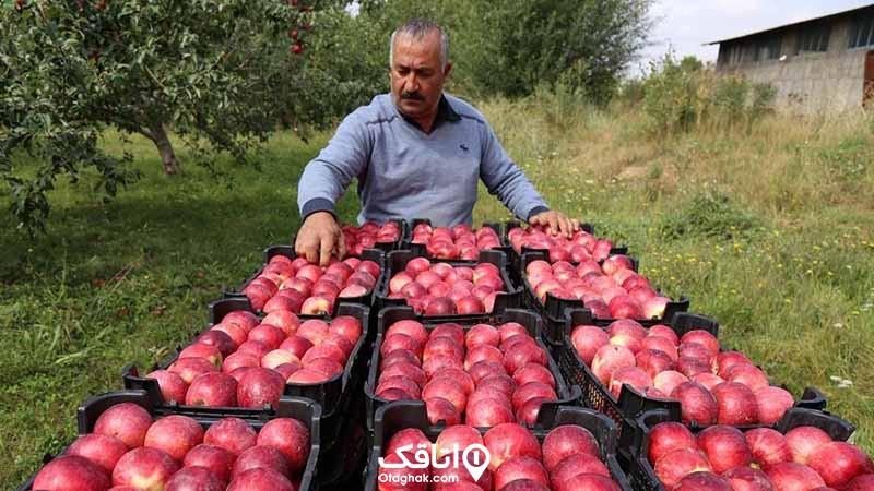 میوه های اهر