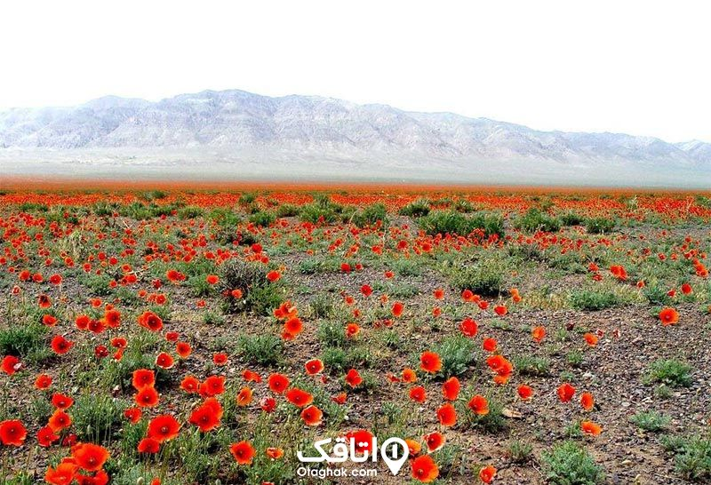 طبیعت شهریار