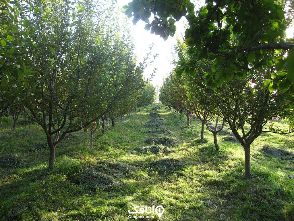 باغ های میوه بومهن